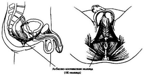 Plázs: Öt tévhit a péniszről | op3ndott.hu