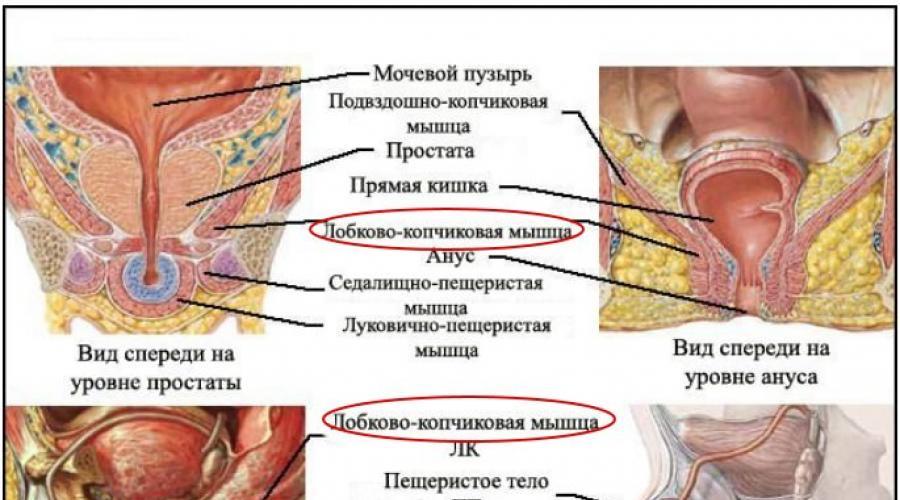 kegel gyakorlatok az erekció fokozására