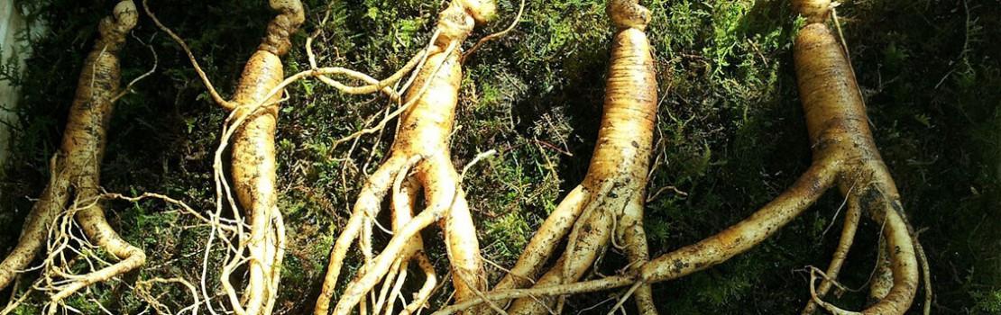 5 csodálatos gyógynövény a potenciáért – az erekció már nem lesz probléma