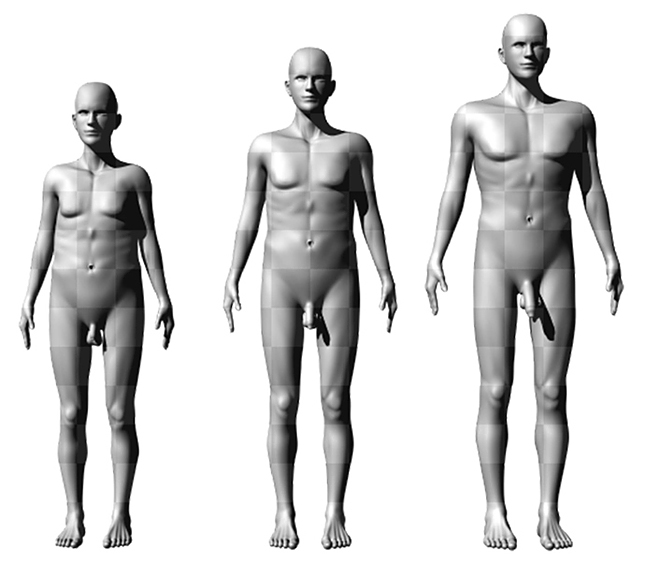 milyen hosszú a pénisz a férfiaknál