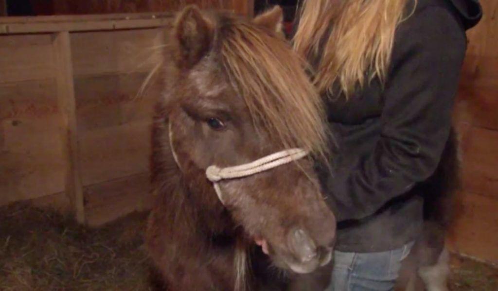 Vásárlás: Pony dildocm Műpénisz, dildo árak összehasonlítása, Pony dildo 25 cm boltok