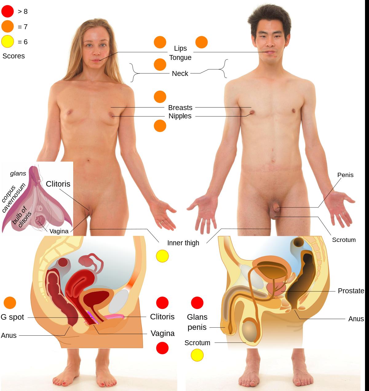hím erogén pontok a péniszen